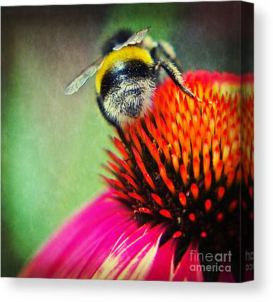 Abstracted Coneflowers Mixed Media Canvas Prints