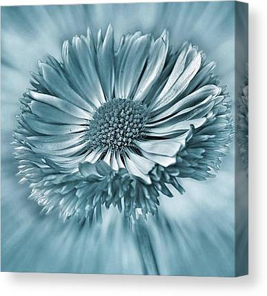 Beauty Canvas Prints