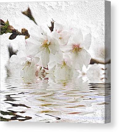 Cherry Blossom Photographs Canvas Prints