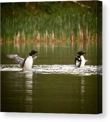 Loons Canvas Prints