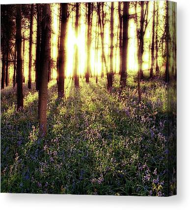 Forests Canvas Prints