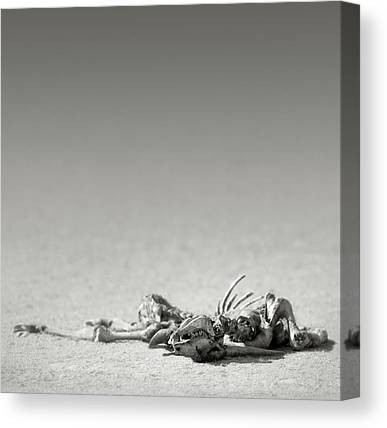 Remains Canvas Prints