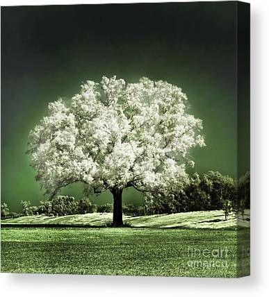 Cherry Tree Canvas Prints