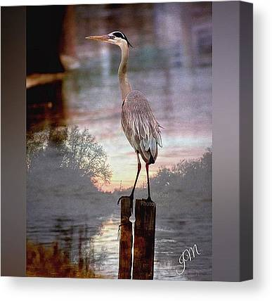 Herons Canvas Prints