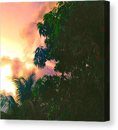 Mango Tree Canvas Prints
