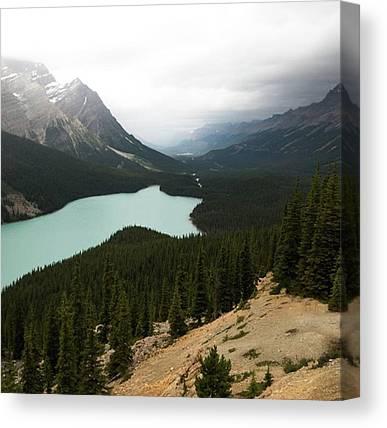 Fox Glacier Canvas Prints