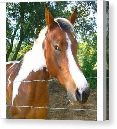 Horse Farms Canvas Prints