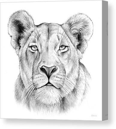 Lioness Drawings Canvas Prints