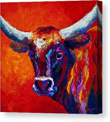 Heifers Canvas Prints