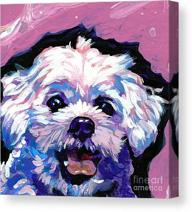 Shih Tzu Canvas Prints