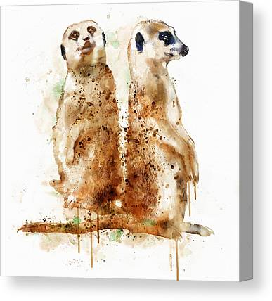 Meerkat Mixed Media Canvas Prints