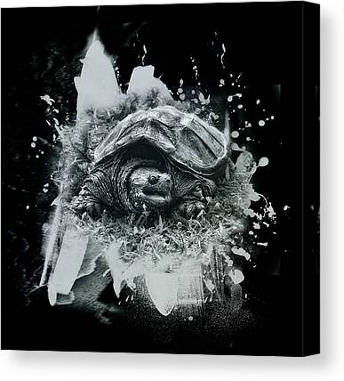 Snapping Turtles Canvas Prints