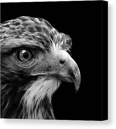 Buzzard Canvas Prints