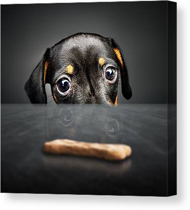 Biscuits Canvas Prints