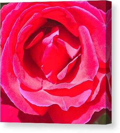 Red Roses Canvas Prints