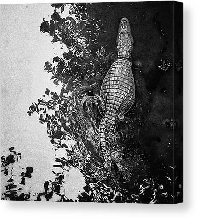 Reptiles Canvas Prints