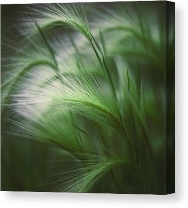 Blade Of Grass Canvas Prints