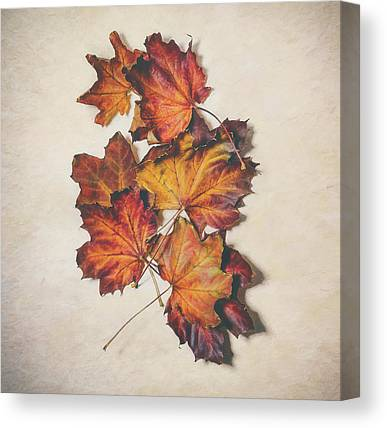 Designs Similar to The Colors Of Fall