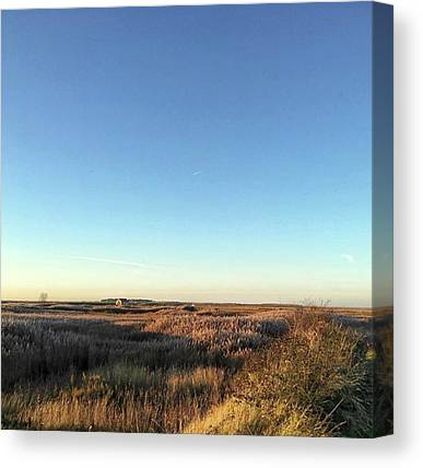 Marshes Canvas Prints