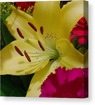 Lily Canvas Prints