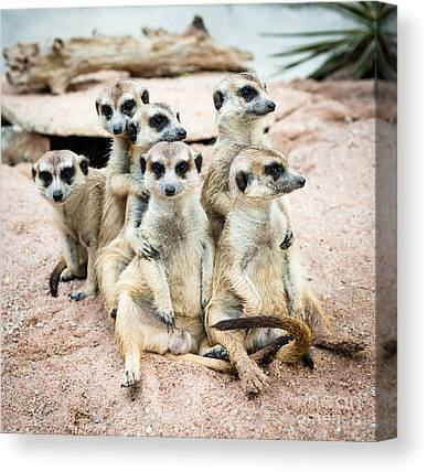 Southern Africa Canvas Prints