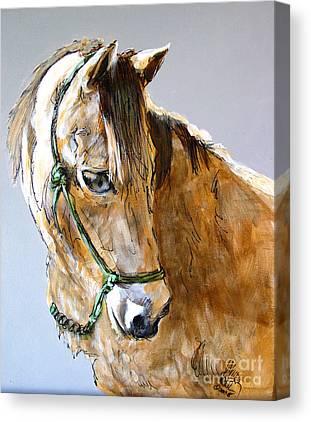 Morgan Horse Canvas Prints