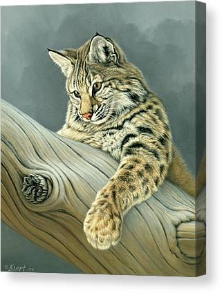 Bobcat Canvas Prints