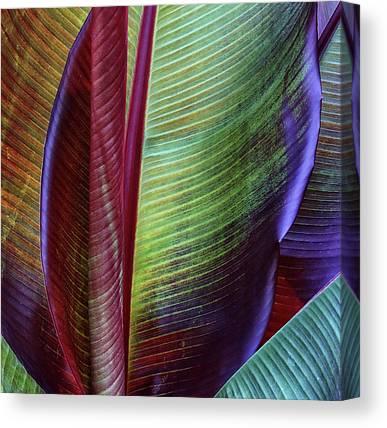 Banana Tree Canvas Prints