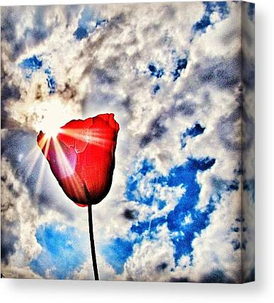 Red Sky Canvas Prints