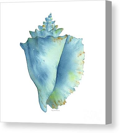 Conch Canvas Prints