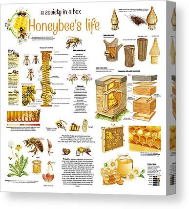 Honeybee Colonies Canvas Prints