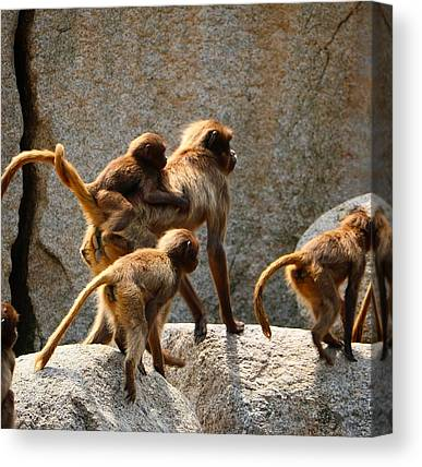 Animal Family Canvas Prints