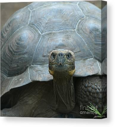 Skull Tortoise #2