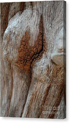 Canvas Print featuring the photograph  A Part Of A Trunk by Michelle Meenawong