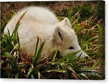 Canvas Print featuring the photograph  A White Fox by Mindy Bench