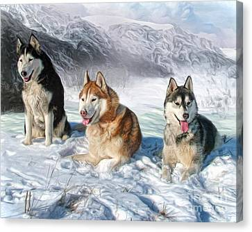 Alaskan Malamute Canvas Print by Trudi Simmonds