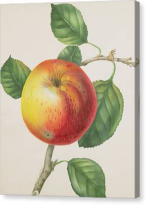 Wild Orchards Canvas Print -  An Apple by Elizabeth Jane Hill
