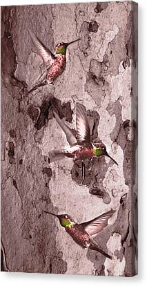 Canvas Print featuring the digital art  Anna's Hummingbirds by Kandy Hurley