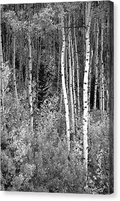 Canvas Print featuring the photograph  Aspen Autumn  by Eric Rundle