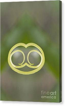 Background With Cucumber Tendril Face Canvas Print