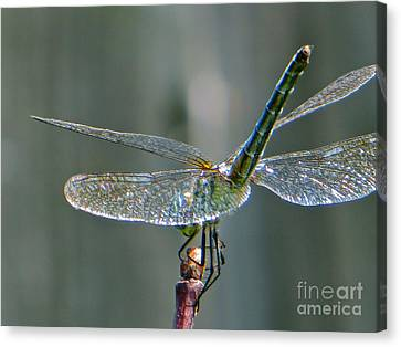 Canvas Print featuring the photograph  Balance by Joy Hardee