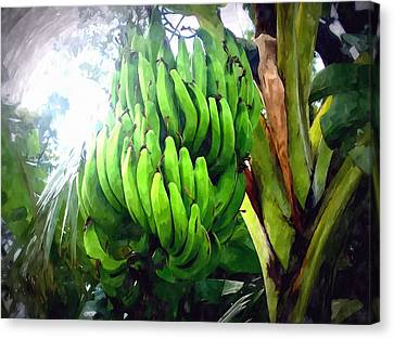 Banana Plants Canvas Print by Lanjee Chee