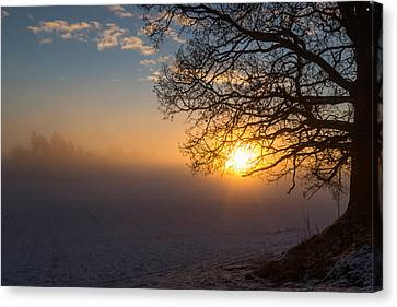 Sunbeams Pour Through The Tree At The Misty Winter Sunrise Canvas Print