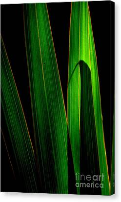Canvas Print featuring the photograph  Black And Green by Michelle Meenawong