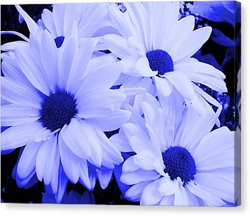 Blue Daisies For You Canvas Print