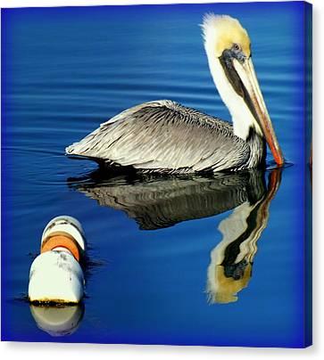 Blues Pelican Canvas Print by Karen Wiles