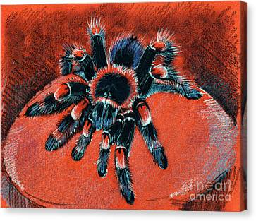 Brachypelma Smithi Redknee Tarantula  Canvas Print by Daliana Pacuraru