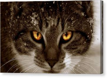 Canvas Print featuring the photograph  Cat Eyes by Yvonne Emerson AKA RavenSoul
