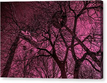 Church And Trees In Pinkish Canvas Print