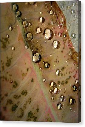 Canvas Print featuring the photograph  Clear Drops by Michelle Meenawong